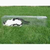 Живоловушка для кошки. Котоловка. Клетка живоловка для кота. Поймать кошку и вернуть домой