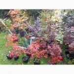 Питомник саженцев, деревьев, кустарников Florinda
