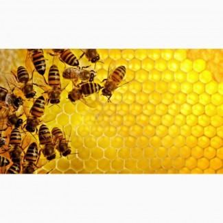 Мёд натуральный, из подсолнуха из собственной пасеки