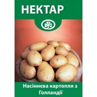 Семенной Картофель Нектар Элита Голландия
