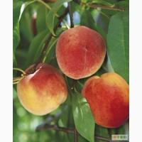 Персик прямо из Сада