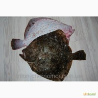 Камбала черноморская