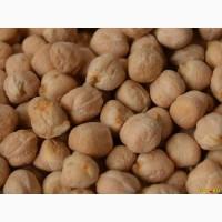 Продаём семена нута Заговит, Иордан, Азкан, Орион, Нортено, Буджак, Триумф, Розана