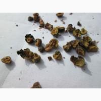 Можжевельник обыкновенный Juniperus Верес ягоды не кондиция для масла