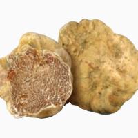 Белый трюфель, белые трюфели, белые трюфеля, трюфели грибы, трюфель