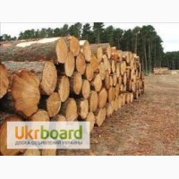 Закупаем дрова акации и др. твердых пород