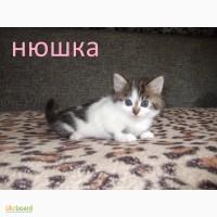 Котята-Пушистики Дарим
