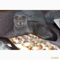 Шикарные крупные котята ищут шикарных хозяев