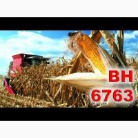 Насіння кукурудзи ВН 6763 (ВНІС)
