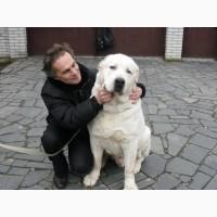 Дрессировка собак с проблемным поведениeм
