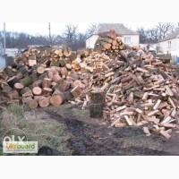Дрова сосновые и дубовые сухие колотые