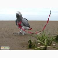 Шлейки для выгула попугаев размеры на все породы, шлейка на попугая