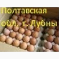 Яйца инкубационные мясных, мясо-яичных, яичных пород