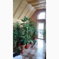 Продам кімнатні рослини щепки