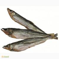 Рыба вяленая премиум класса