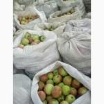 Закупаем яблоки на переработку на соки от 20 тонн
