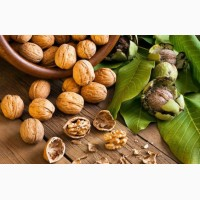 Услуги по переработке Грецкого ореха: мойка, сушка, калибровка