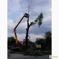 Аварійний спил дерев
