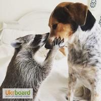 Курсы - обучение по стрижке собак и кошек