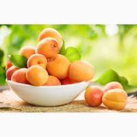 Простые рецепты блюд из абрикоса