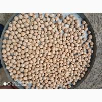 Продаем семена нута сорт Norteno