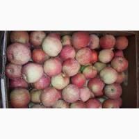 Яблоки летние Слава Победителям 60