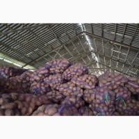 Продаем картофель оптом, со склада в Киеве