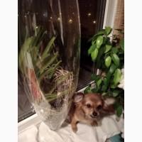 Стеклянный горшок-сосуд для орхидеи Ванда