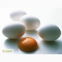 Одесские яйца категории отбора С-1 и С-0