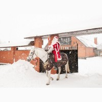 Подарок на Рождество - подарочный сертификат на конную прогулку или занятие