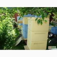 Продам пчел в Харькове