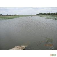 Продам пруд, ставок, водоем