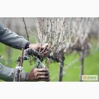 Профессиональная обрезка винограда, садовых растений