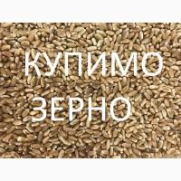 Закуповуємо на постійній основі пшеницю по Львівській області
