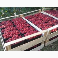 Закупаемо ягоду малини