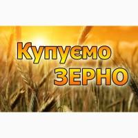 На постійній основі закуповуємо пшеницю (не кондицію, биту, заражену сажкою, з запахом)