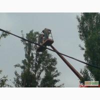 Кронирование деревьев Киев. Обрезка веток. Удаление деревьев Киев 466 59 42
