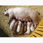 Ферментационная подстилка опт и розница, пробиотики для животных