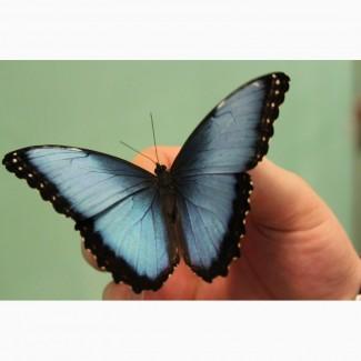 Восхитительные Живые Бабочки изКоста Рикки