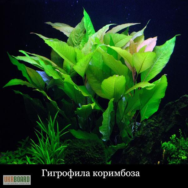 kupit-vodnie-rasteniya-v-ukraine-podarit-tsveti-v-pyatigorske