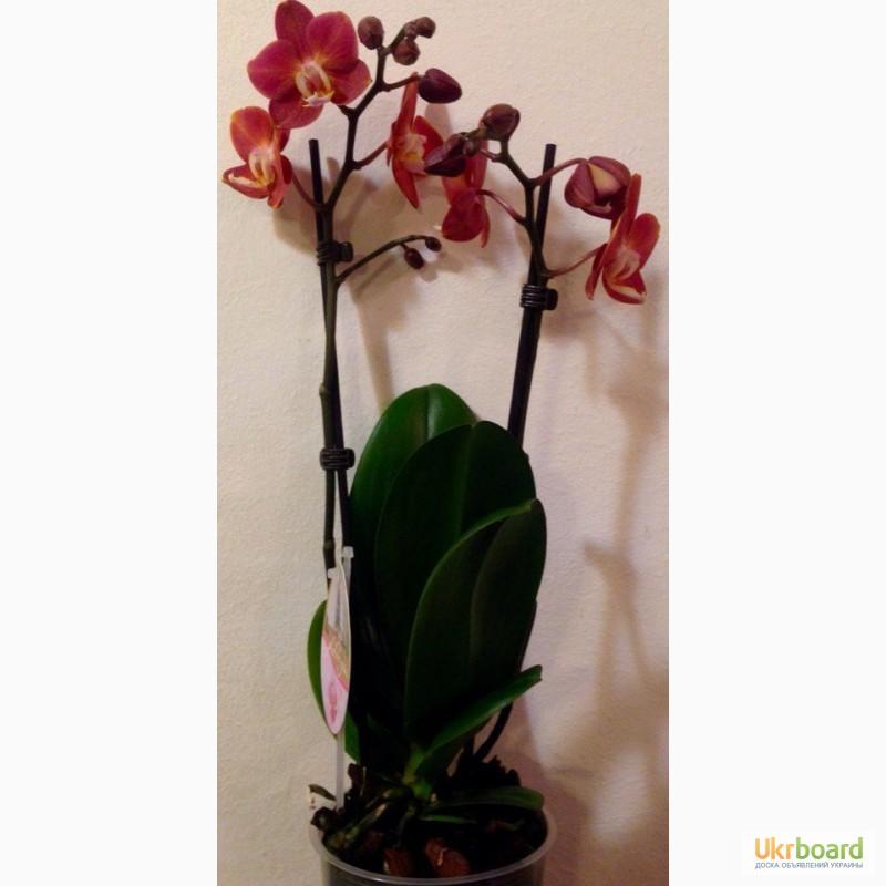 Купить Красивоцветущие  Горшечные цветы и растения
