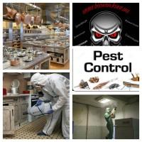 Комплексное уничтожение насекомых, грызунов
