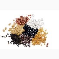 Продам весовые семена овощных и бахчевых культур оптом и розница