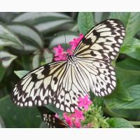 Тропические Живые Бабочки изЮжной Америки