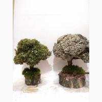 Живе декоративне дерево