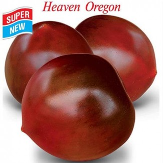 Продам семена Томат Небеса Орегона