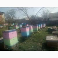 Продам пасіку 100 бджоло-сімей разом з вуликами, вулики нові двохкорпусні полістиролові
