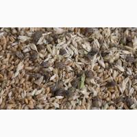 Зерноотходы, некондиция, битое зерно, зерносмеси. Закупаем дорого