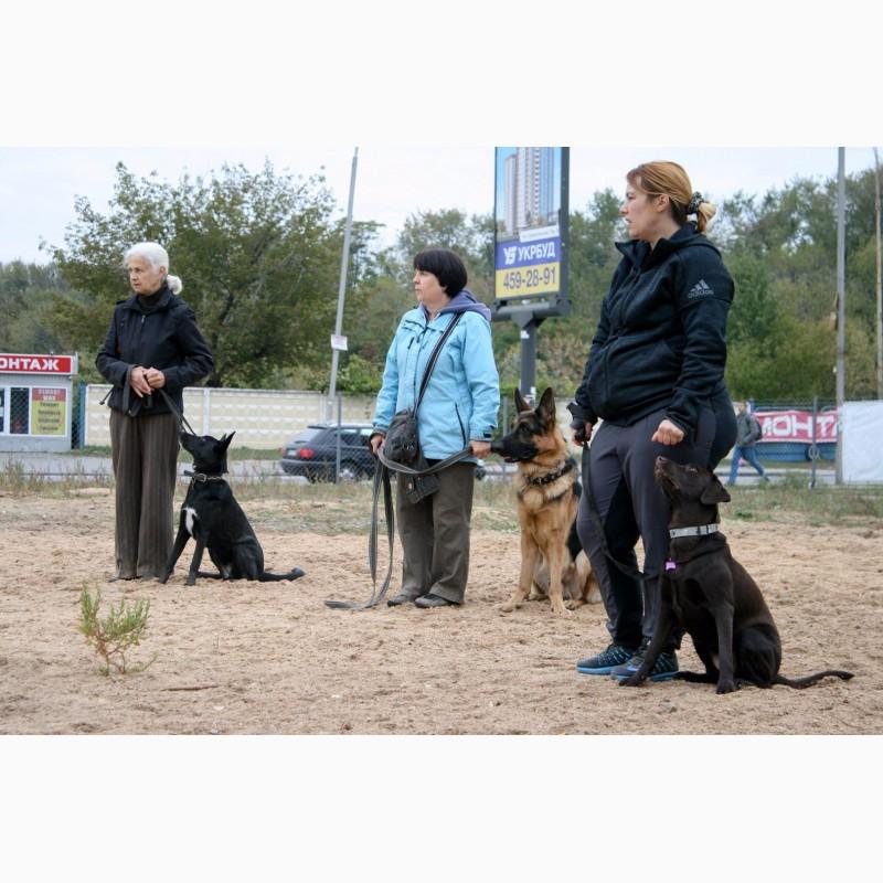 год Водолей хендлер митино обучение собак прихода Банк Москвы