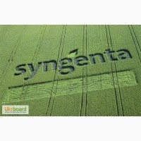 Продам семена кукурузы Сингента (Syngenta) на зерно, гибрид-СИ Топмен